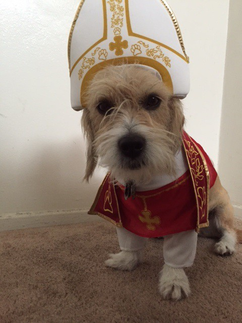 Pope Daisy